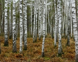 Know Your Hardwood Trees